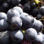 un beau raisin